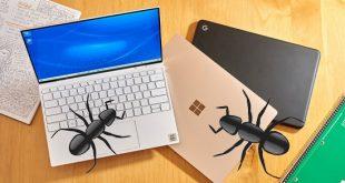 xử lý kiến chui vào laptop